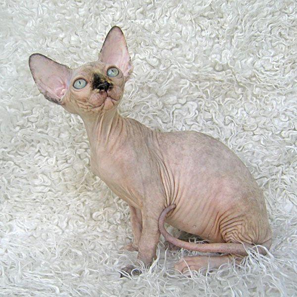 Египетские коты картинки - 3bd
